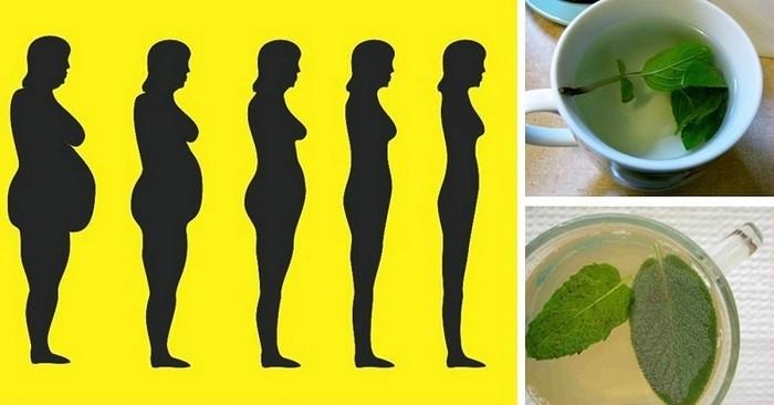 Травы для похудения, сжигающие жир 2