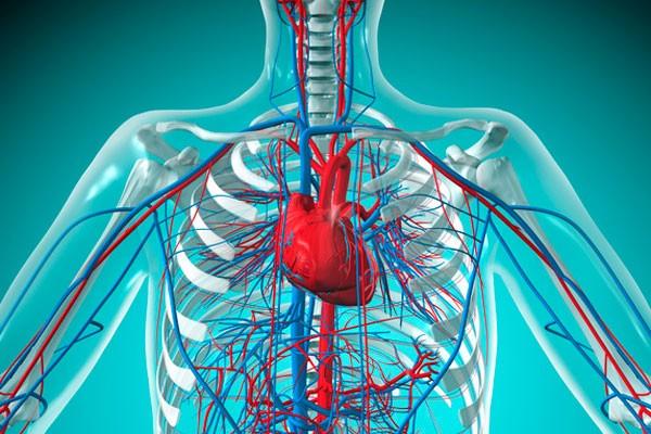 Сердечно-сосудичсые заболевания